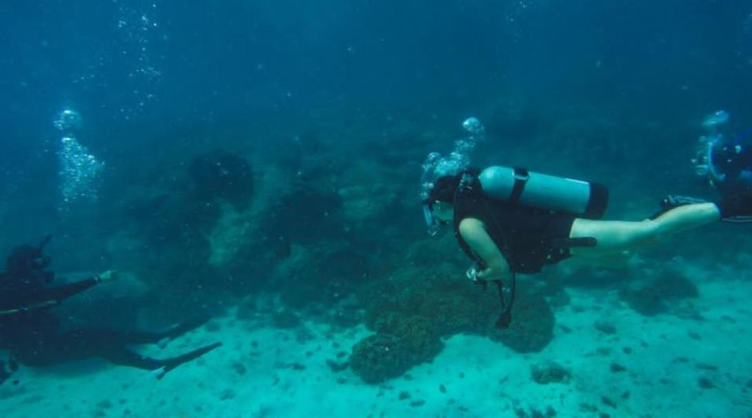 A diver collects scientific data during an underwater survey on our Marine Conservation Project in Mexico